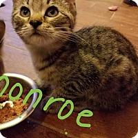 Adopt A Pet :: Monroe - Glendale, AZ