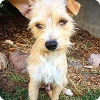 Adopt A Pet :: CJ - Fredericksburg, TX