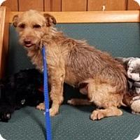 Adopt A Pet :: RUSTY - Gustine, CA