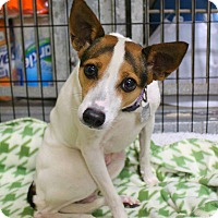 Adopt A Pet :: Victoria - Shreveport, LA