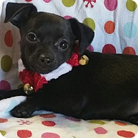 Adopt A Pet :: Gift - Los Angeles, CA