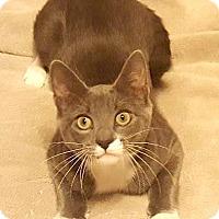 Adopt A Pet :: Archer - Baton Rouge, LA