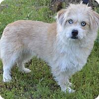 Adopt A Pet :: Rosie - Campbell, CA