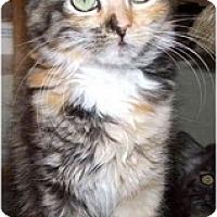 Adopt A Pet :: Eva - Davis, CA