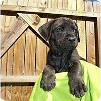 Adopt A Pet :: Suzy Q - Albany, GA