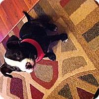 Adopt A Pet :: Piglette - Salem, OR