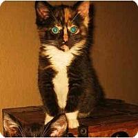 Adopt A Pet :: Jasmine - Modesto, CA