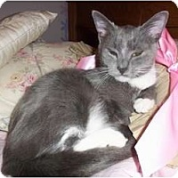 Adopt A Pet :: Adora - Sterling Hgts, MI