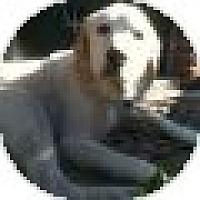 Adopt A Pet :: Sunshine - Denver, CO