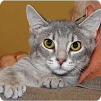 Adopt A Pet :: Rebel - Monroe, GA