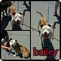 Adopt A Pet :: Bailey - Owasso, OK