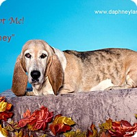 Adopt A Pet :: Honey - Acton, CA