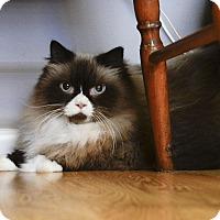 Adopt A Pet :: Truffles - Bradenton, FL