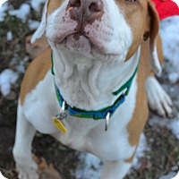 Adopt A Pet :: Nala - Park Ridge, NJ