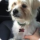 Adopt A Pet :: Mandie