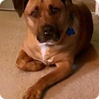 Adopt A Pet :: Apache - Cuddebackville, NY