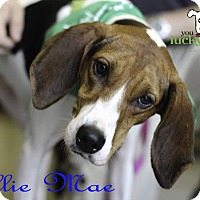 Adopt A Pet :: Ellie Mae - Alpharetta, GA
