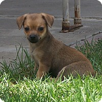Adopt A Pet :: Sally - La Habra Heights, CA