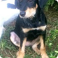 Adopt A Pet :: Frances - North Brunswick, NJ