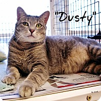 Adopt A Pet :: Dusty - Ocean City, NJ