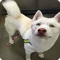 Adopt A Pet :: Milo - Provo, UT