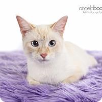 Adopt A Pet :: Layla - Eagan, MN