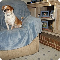 Adopt A Pet :: Pugsley -Adopted! - Kannapolis, NC