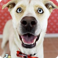 Adopt A Pet :: Pippin (Lonely Heart) - Gulfport, MS