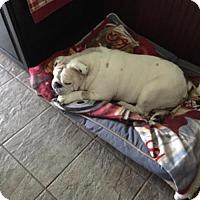 Adopt A Pet :: Tubbie - Odessa, FL