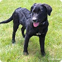 Adopt A Pet :: Rhea - Bedford, VA