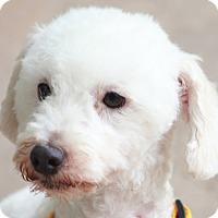 Adopt A Pet :: Wilton - Woonsocket, RI