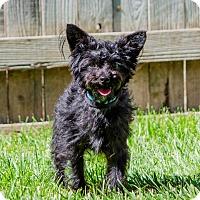 Adopt A Pet :: Jasper - Lodi, CA