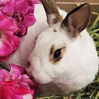 Adopt A Pet :: Sara - Tustin, CA