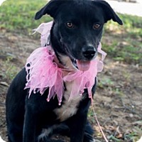 Adopt A Pet :: Kandy - Muldrow, OK