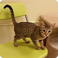Adopt A Pet :: Ciara - Phoenix, AZ