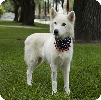 Husky/Siberian Husky Mix Dog for adoption in Houston, Texas - Magnolia