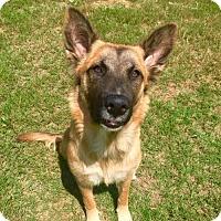 Adopt A Pet :: Majesty - Longview, TX