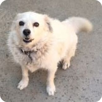 Terrier (Unknown Type, Medium) Mix Dog for adoption in Canoga Park, California - Sparky