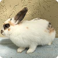 Adopt A Pet :: Sophia - Bonita, CA