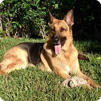 Adopt A Pet :: SONNY-16- in Orlando Fl - Lithia, FL
