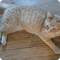 Adopt A Pet :: ISOBEL - Evans, WV