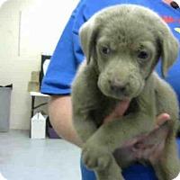 Adopt A Pet :: GOOSE - Conroe, TX