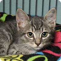 Adopt A Pet :: Michael - Tomball, TX