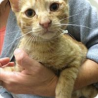 Adopt A Pet :: Nico - Hallandale, FL