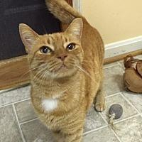 Adopt A Pet :: Harley - Stevensville, MD