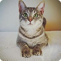 Adopt A Pet :: Storm - Fredericksburg, TX