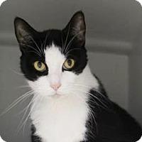 Adopt A Pet :: Bosci $20 - Lincolnton, NC