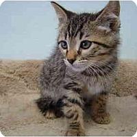 Adopt A Pet :: Donovan - Modesto, CA