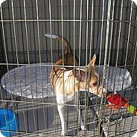 Adopt A Pet :: Bessie - Las Vegas, NV
