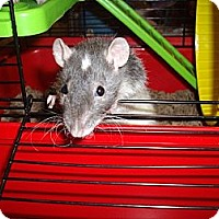 Adopt A Pet :: Thyme - Greenwood, MI